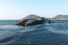 美味しい海苔が育つ小豆島の海