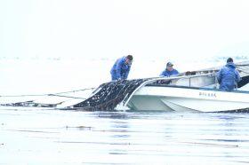 小豆島の海苔漁